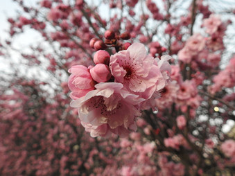 Blossom season | by Belle Formica