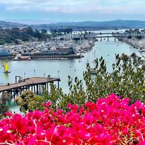 Dana Point Harbor Photograph by Virginia Crowe