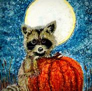 Raccoon commission