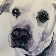 Bodie Pet Portrait Commission