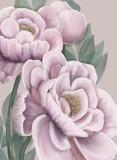 Digital Flowers by Virginia Crowe using Procreate.  Peonies flowers