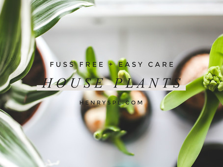 Fuss free easy care house plants