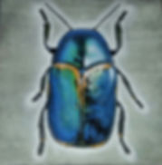 Beetle acryl art by Cicilia Postma