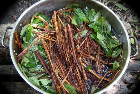 Plant Stew.jpg
