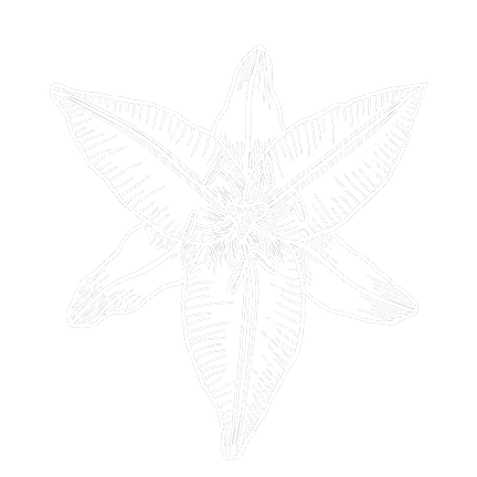 Alchemy + Lily logo - transparent_edited.png