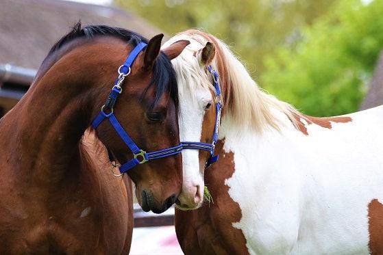 equine visions paarden paardvriendelijke huisvesting