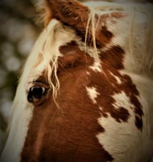 Het paard van Troje