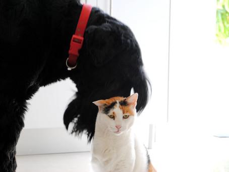עיקור וסירוס כלבים וחתולים