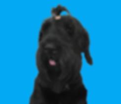 דמיס_צהוב_edited-removebg-preview (1).pn
