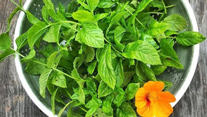 Why and How to Grow Herbs