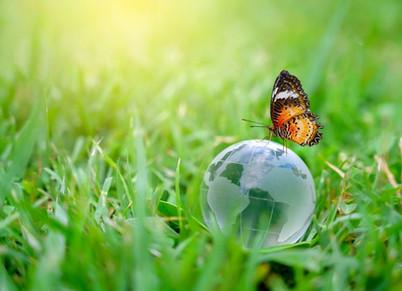La chronique du lundi : la biodiversité