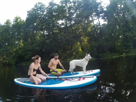 Собачий SUP бординг