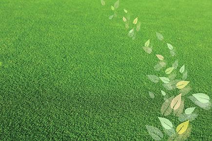 GrassAndLeaves.jpg