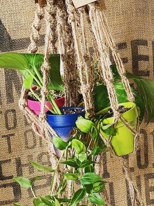 Macrame Plant hangers with Live plant