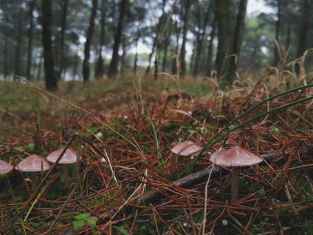 En el silencio del bosque