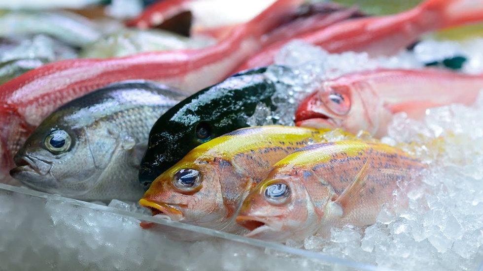 الأسماك المجمدة