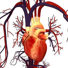 cardiovascular_edited.jpg