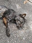 Envenenamiento de gatos en un hospital habanero