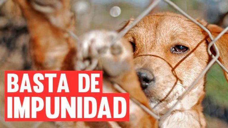 Peticiones de los animalistas cubanos a incluir en el Decreto-Ley de Bienestar Animal en Cuba