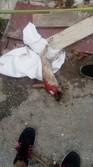 Caso de zoocidio en La Habana
