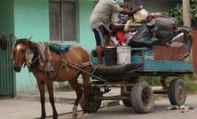 Caballos abusados en Bayamo