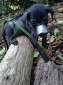 Caso de bestialismo y zoosadismo en La Habana