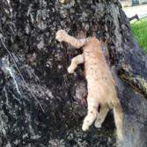 Decapitación de gatos