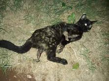 Mutilación de gato en La Habana