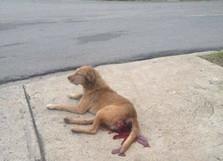 Caso de zoofilia en La Habana