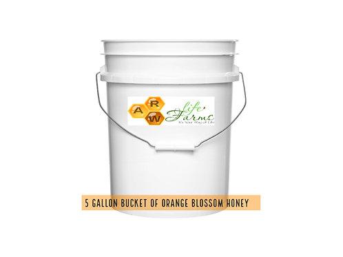 5 Gallon Orange Blossom Honey