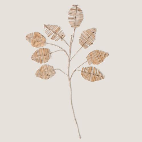 Planta Delicado 8 stem