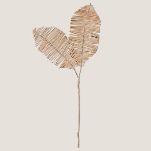 Planta Delicado 2 stem