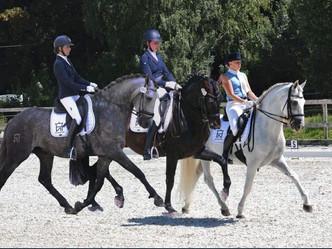 Haras de Niaster > Londres > 3 chevaux HN > J-15