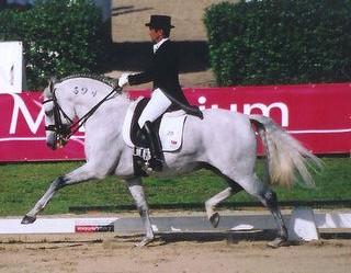 Stage avec le cavalier olympique Carlos Pinto