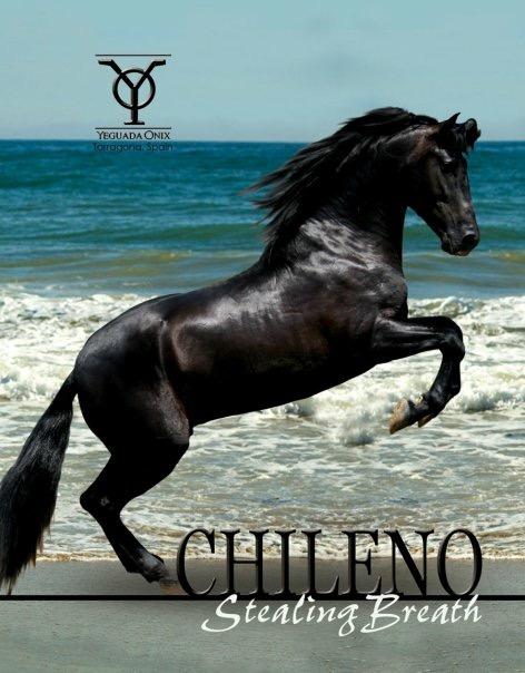 Chileno IX (Yeguada J.L.Escalera)