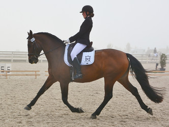 Nos 3 chevaux finalistes pour Welkenraedt