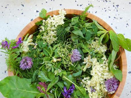Die wichtige Rolle von Gewürzen und Wildpflanzen in unserer Ernährung