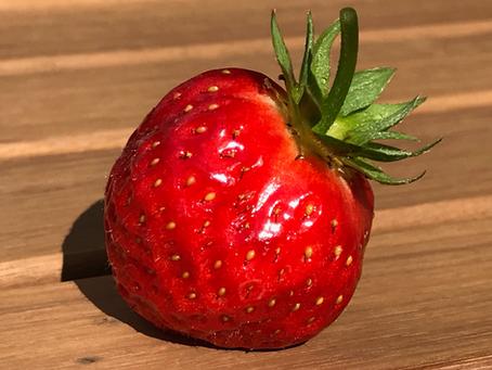 The strawberry – a delicacy