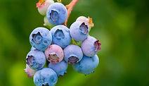 berries-3513547_1920 .jpg
