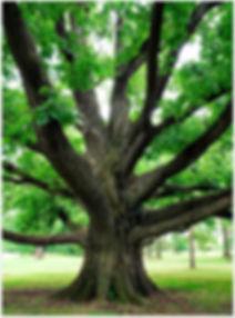 oaktree-1.jpg