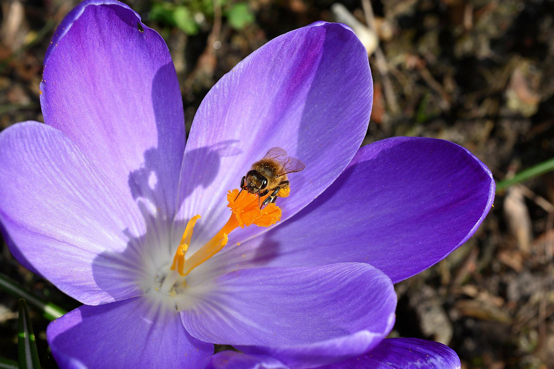 abelha  6