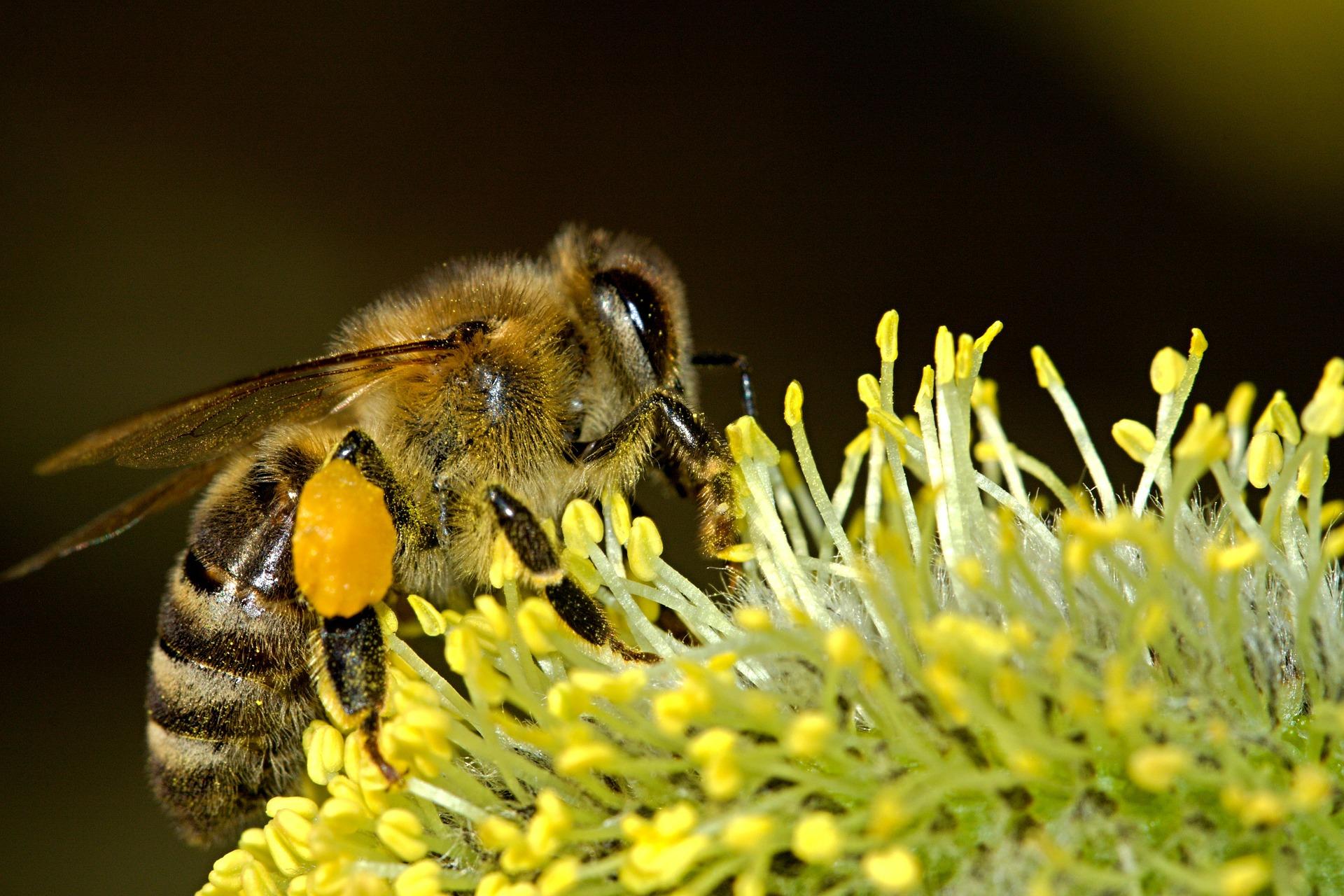 abelha 2