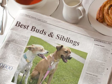 Best Buds & Siblings on Morning News!