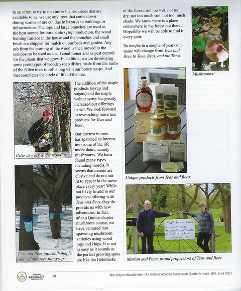 Teas and Bees Article Woodlander Issue 1