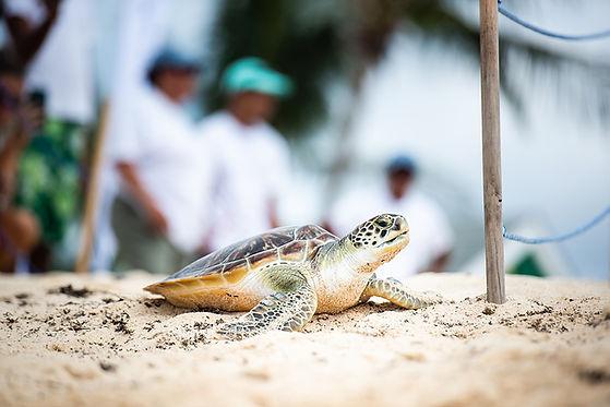sea turtle (1).jpg