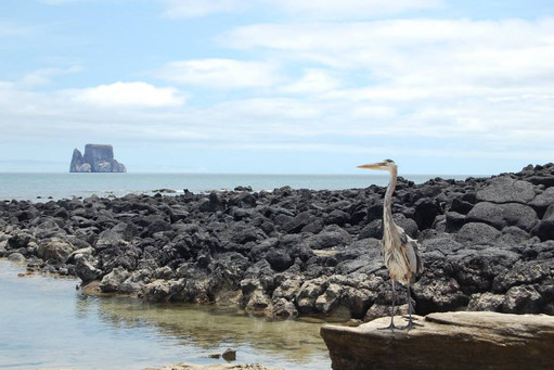 Kicker Rock-klippan i horisonten