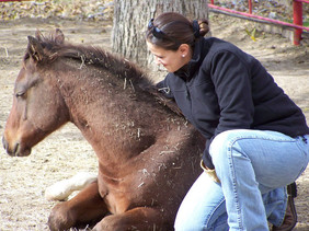 BONDING WITH YOUR NEW HORSE