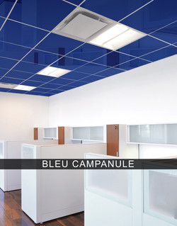 bleucampanule