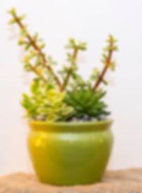 Succulent designs