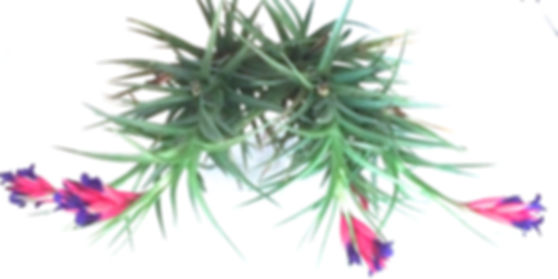 air plant design custom